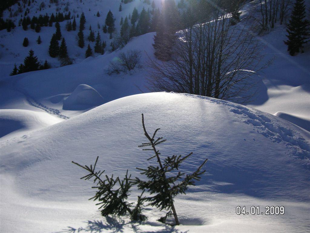 guzzella-04-01-2009-72