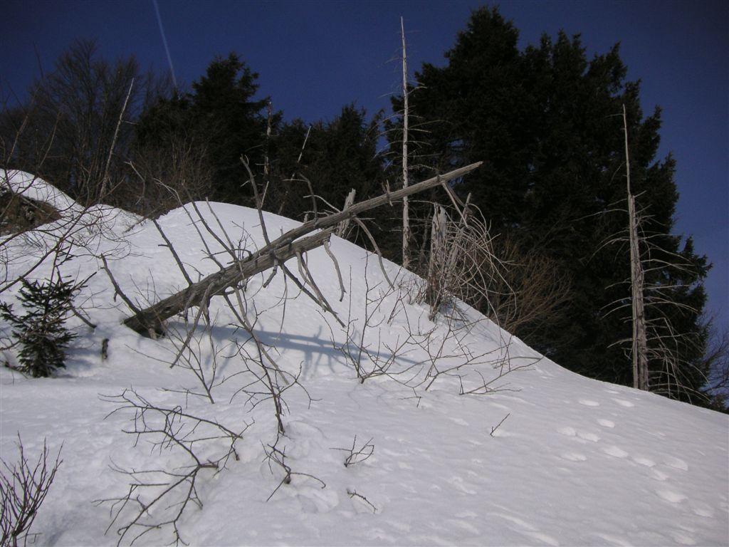 sass-brusai-22-02-2009-30