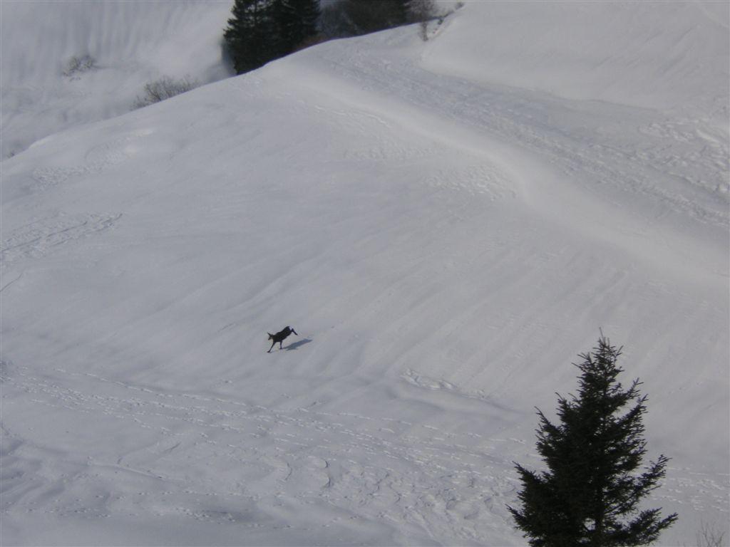 sass-brusai-22-02-2009-43