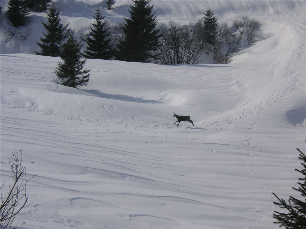 sass-brusai-22-02-2009-44